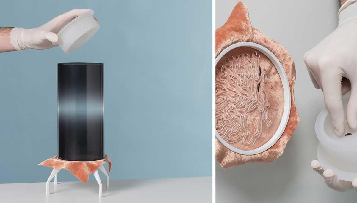 Fashion Tech : le bio-sourcing est - il l'avenir de la mode ?